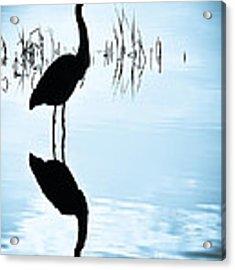 Blue Herons Acrylic Print by Francis Trudeau