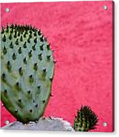 Cactus And Pink Wall Acrylic Print by Carol Leigh