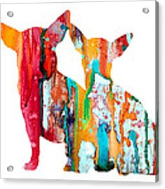 Chihuahua 4 Acrylic Print by Watercolor Girl