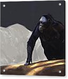 Chimp Contemplation Acrylic Print by Aaron Blaise