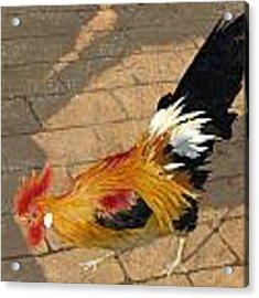 Cock Of The Walk Acrylic Print by John Wyckoff