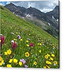 Colorado Wildflowers And Mountains Acrylic Print by Cascade Colors