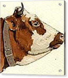 Cow Head Study Drawing Acrylic Print by Juan  Bosco
