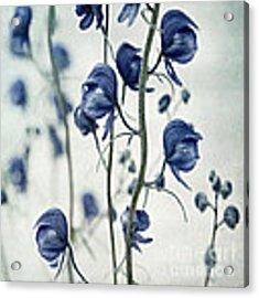 Deadly Beauty Acrylic Print