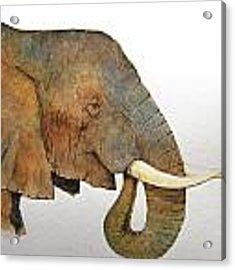 Elephant Head Study Acrylic Print