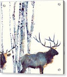 Elk // Follow Acrylic Print by Amy Hamilton