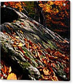 Fall In Gyeryongsan Acrylic Print by Brad Brizek