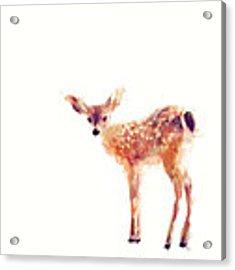 Fawn Acrylic Print by Amy Hamilton
