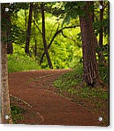 Forest Path Acrylic Print by Brad Brizek