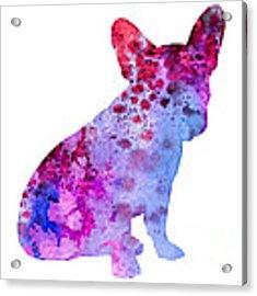 French Bulldog 3 Acrylic Print