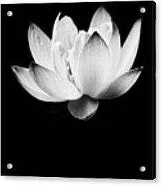 Ghost Lotus Acrylic Print by Priya Ghose