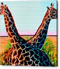 Giraffes Acrylic Print by Donna Proctor