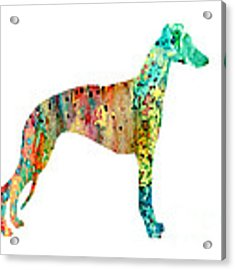 Greyhound  Acrylic Print by Watercolor Girl