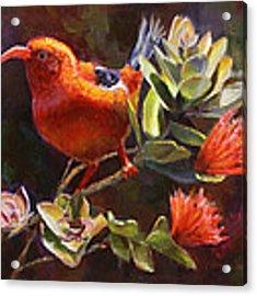 Hawaiian IIwi Bird And Ohia Lehua Flower Acrylic Print by Karen Whitworth