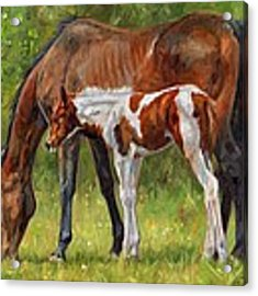 Horse And Foal Acrylic Print by David Stribbling