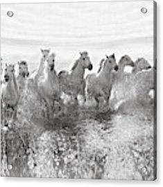 Illusion Of Power (13 Horse Power Though) Acrylic Print by Roman Golubenko