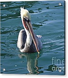 Just Wading Acrylic Print by Laurie Lundquist