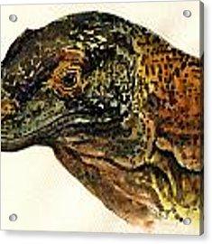 Komodo Monitor Acrylic Print