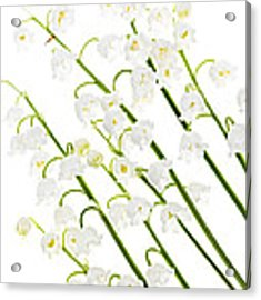 Lily-of-the-valley Flowers Acrylic Print