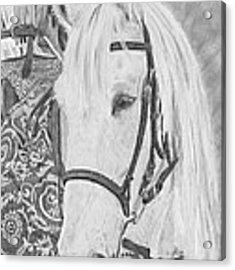 Midsummer Knight Majesty Acrylic Print by Gigi Dequanne