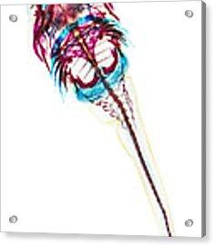 Northern Clingfish Acrylic Print
