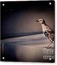 On Guard Acrylic Print by Kristi Swift