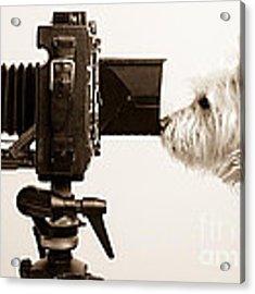 Pho Dog Grapher Acrylic Print