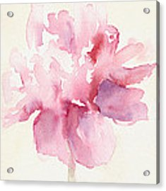 Pink Peony Watercolor Paintings Of Flowers Acrylic Print by Beverly Brown