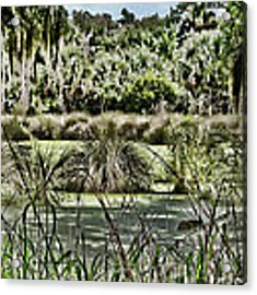 Princess Place Swamp Acrylic Print by Alice Gipson