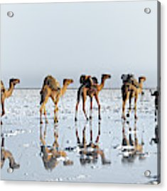 Reflections Of An Ancient Life Acrylic Print by Trevor Cole