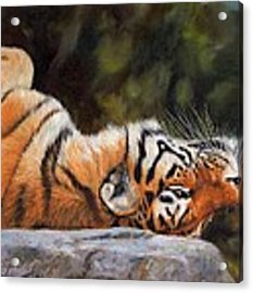 Resting Tiger Painting Acrylic Print by David Stribbling