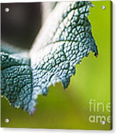 Slice Of Leaf Acrylic Print by John Wadleigh