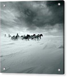 Snowy Field Acrylic Print by Shu-guang Yang