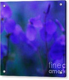 Spring Purfume Acrylic Print by Julian Cook