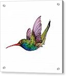 Swooping Broad Billed Hummingbird Acrylic Print by Amy Kirkpatrick