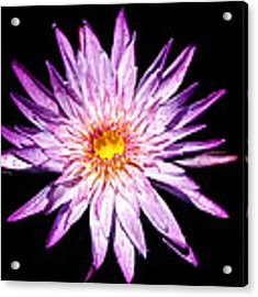 Water Lily. Acrylic Print by Evelyn Garcia