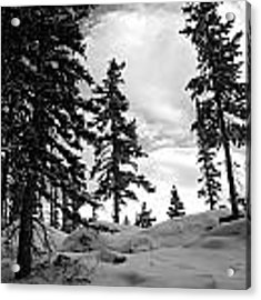 Winter Pines Silhouetted Against The Sky Acrylic Print by Cascade Colors