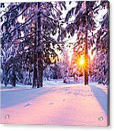 Winter Sunset Through Trees Acrylic Print by Priya Ghose