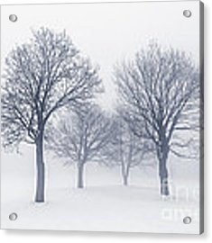 Winter Trees In Fog Acrylic Print