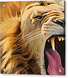 Yawning Lion Acrylic Print by Aaron Blaise