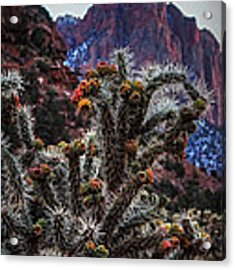 Zion Buckhorn Cholla Macro 001 Acrylic Print by Lance Vaughn