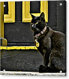 Black Cat Yellow Trim Acrylic Print by Williams-Cairns Photography LLC