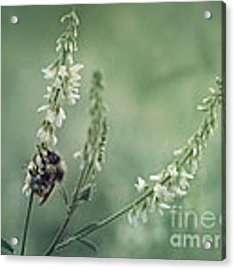 Collecting The Summer Acrylic Print