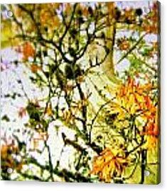 Magic Tree Acrylic Print by HweeYen Ong