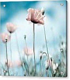 Poppy Flowers 10 Acrylic Print by Nailia Schwarz