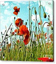 Red Poppy Flowers 03 Acrylic Print by Nailia Schwarz