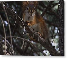 Nuts    Is My Name Acrylic Print by Dennis Wilkins