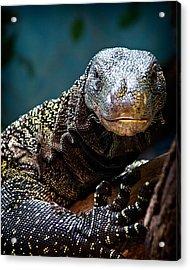 A Crocodile Monitor Portrait Acrylic Print by Lana Trussell