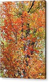 Autumn Confetti Acrylic Print