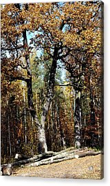 Autumn In Forest Acrylic Print by Henryk Gorecki